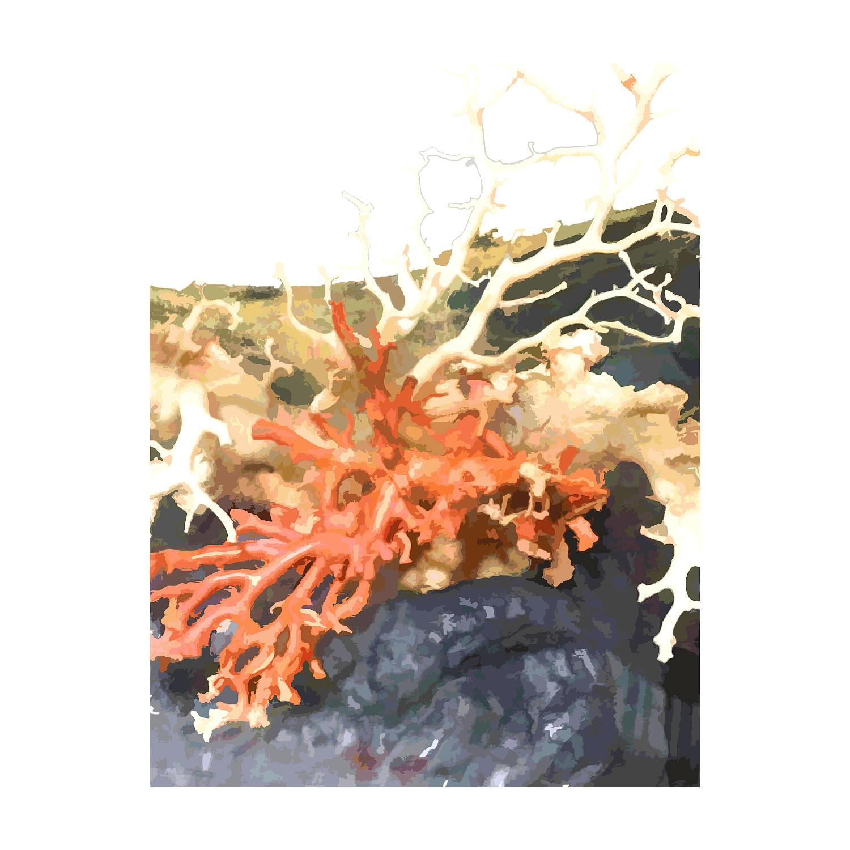 「【大型】天然珊瑚の置物」40,000円!