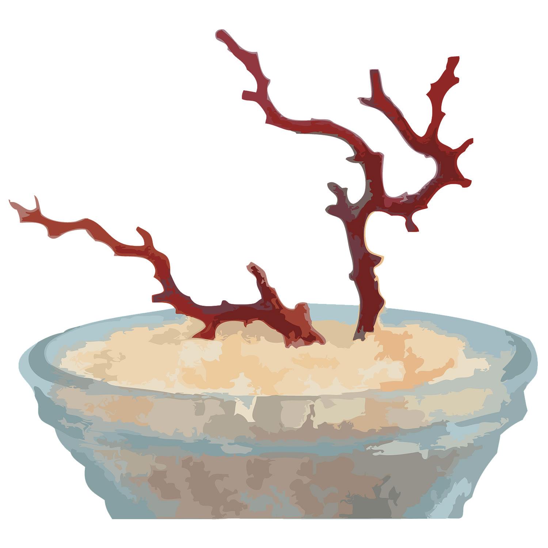 「【高知沖産】血赤珊瑚の拝見・置き物」30,000円!